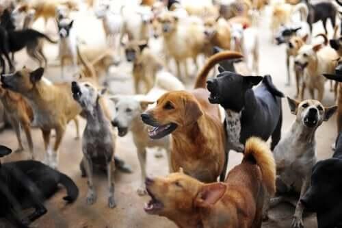 Takis reddede over 200 efterladte hunde i Grækenland