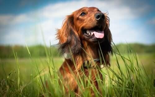 Sådan ved du, om din hund er glad