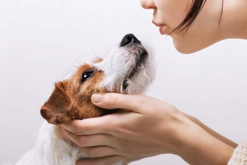 Vi skal sige tak for hundes loyalitet