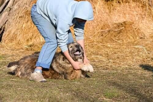 Hund er offer for internetvideoer med dyremishandling