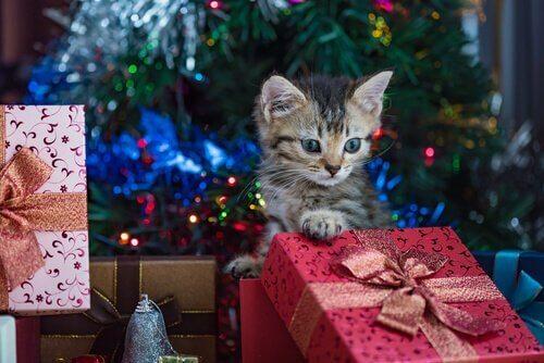 Kat sidder omringet af julegaver