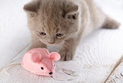 En kat leger med en bamse