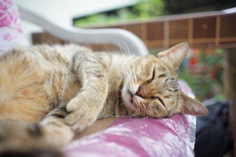 En kat ligger og sover