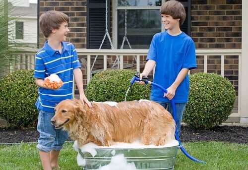 Råd til at bade en hund med en haveslange