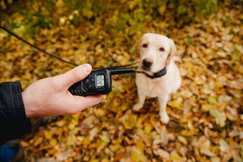 Der findes anti gø halsbånd, der giver hunden et lille elektrisk stød, når den gør