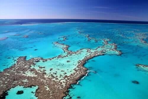 Dyrelivet ved great barrier reef er mangfoldigt