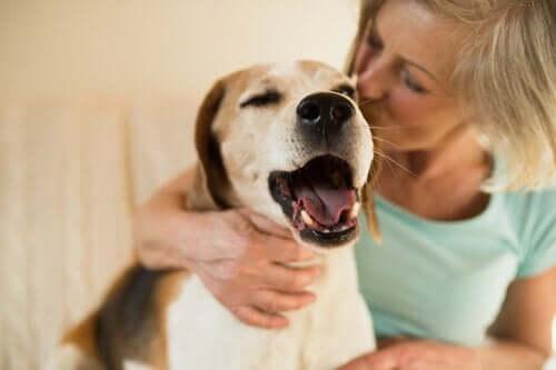 dame, der kysser hund