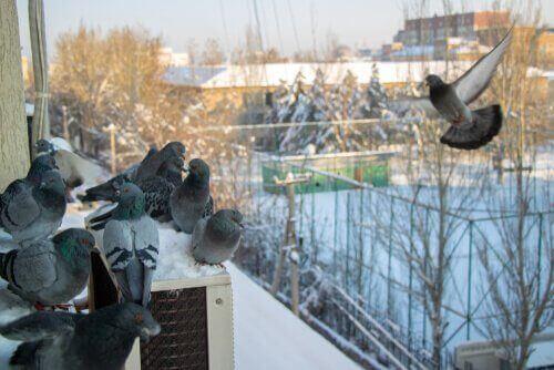 7 måder at skræmme duer væk på