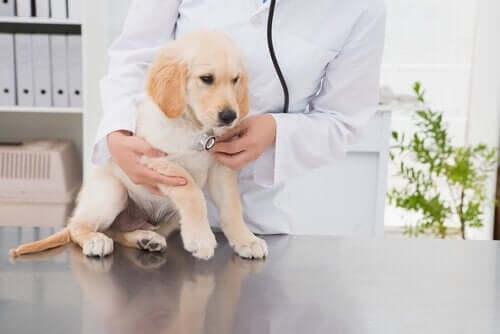 Sådan vælger du den rigtige dyrlæge til dit kæledyr