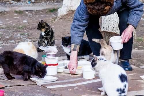 Person er ved at fodre fritlevende katte