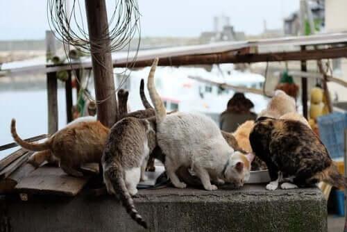 Turisterne fodrer de mange katte på katteøerne i Japan