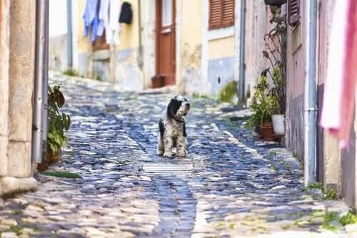 Hund i Lissabon, da det er et godt sted til ferie med hund i Europa