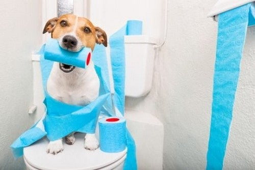 Hund sidder på toilettet med toiletpapir i munden