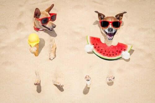 Hunde i varmen kan have svært ved at spise
