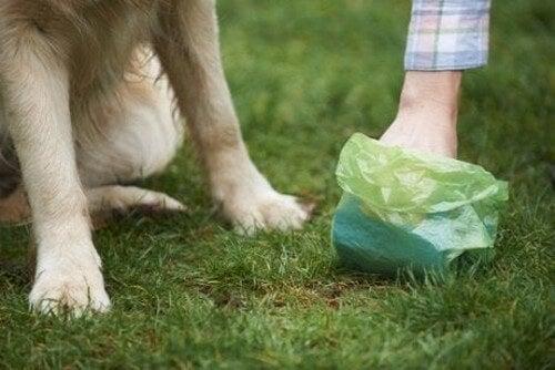 Pose til gåtur med hunden kan gøre, at en hund ikke kan give salmonella