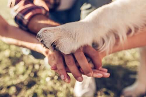 hundepote ovenpå bunke med hænder