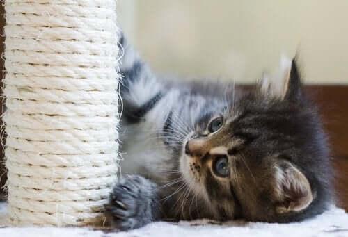 kat med kradsepæl