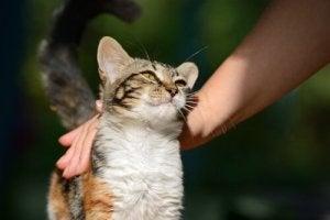 Kat spinder, fordi ejer kæler med den
