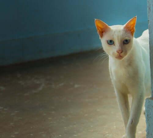 Kat med en smuk hvid pels