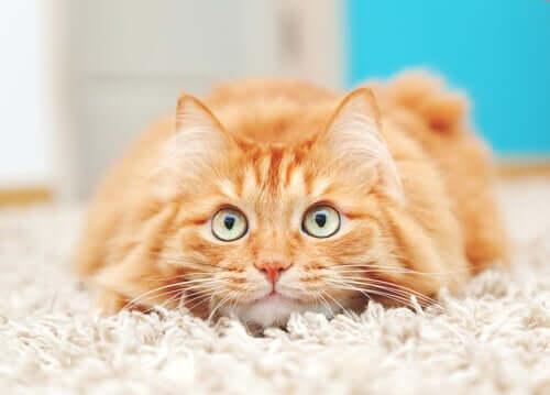 en kat på et gulvtæppe