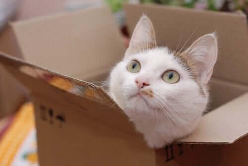 Kat gemmer sig i en papkasse