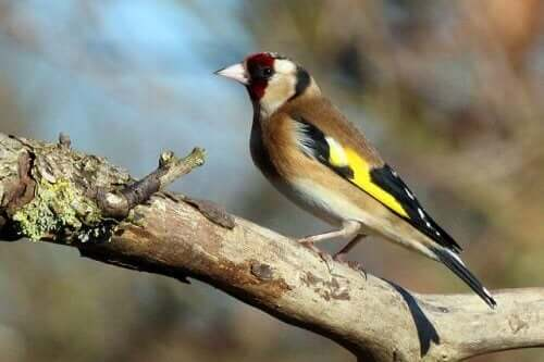 Stillidsunger: Sådan fodrer du disse små fugle