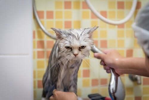 katten får et bad
