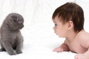 Kat og baby sammen