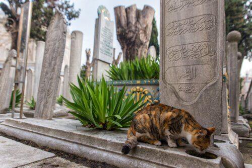 Istanbul er kendt som kattenes by