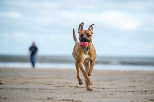 De bedste kæledyrsvenlige strande i Spanien