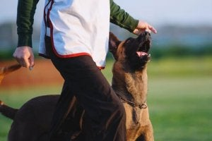 Ejer er i gang med at træne en døv hund