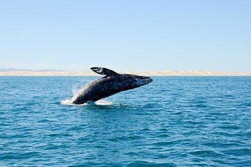 Uddøde hvaler opdaget ud for Spaniens kyst