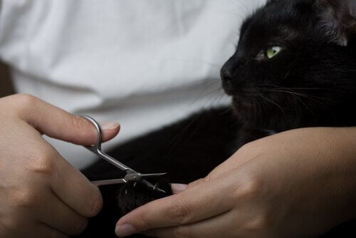 Ejer i gang med at klippe en kats kløer