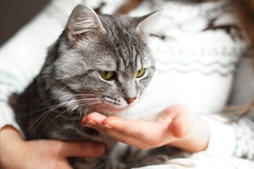 kat i skød hos ejer