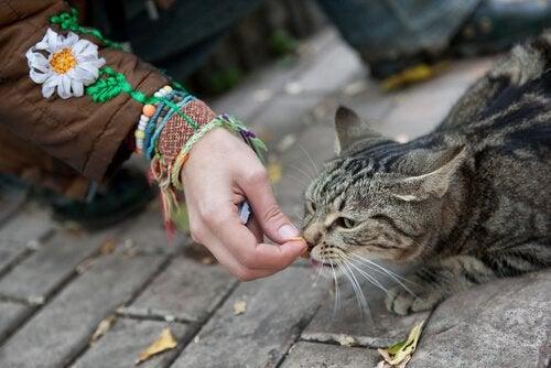 Sådan kan du vinde en herreløs kats tillid