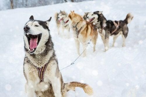 4 typer navne til hanhunde