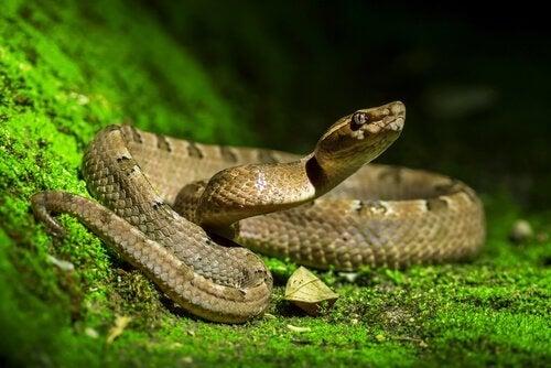 Der er en slange i haven: Hvad skal jeg gøre?