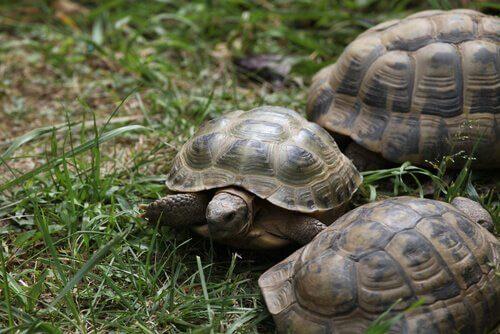 små skildpadder udenfor