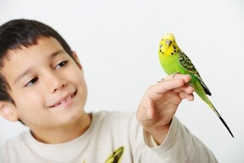 Dreng med fugl på hånden