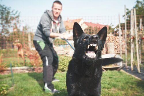 Er det sandt, at hunde kan fornemme frygt?