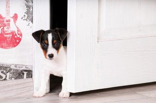Sådan kan du vænne en hvalp til et nyt hjem