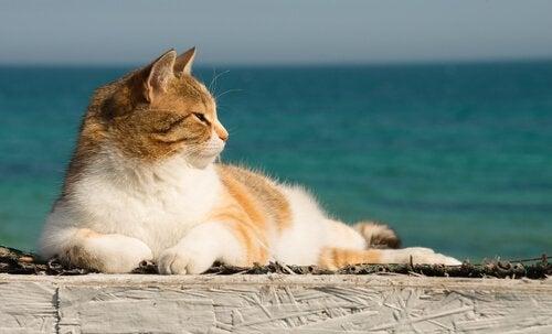 Sådan kan du nedkøle en kat om sommeren