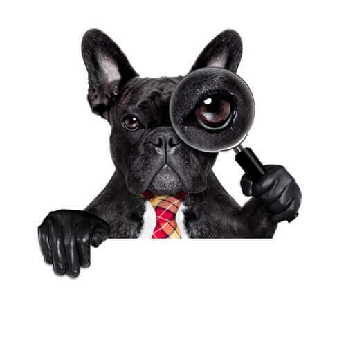 Videnskabelige besynderligheder omkring hunde
