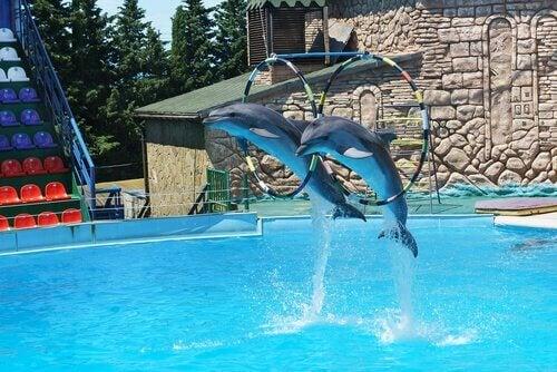 Er delfinarier frihed eller fængsel?