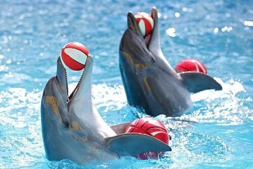 delfiner i leg med bolde