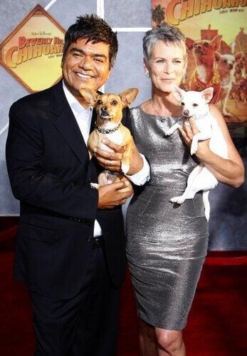 en chihuahua i hovedrollen i denne film til hunde