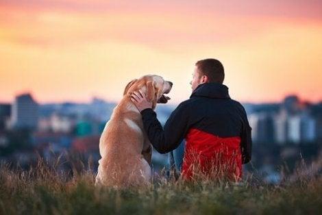 Loyale hunde nyder tid med deres ejere