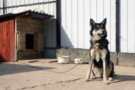 Hund i hundegård er eksempel på et kæledyr i familien