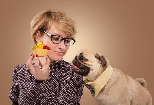 Hund forsøger at få kage af sin ejer