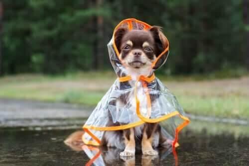 Sådan kan du beskytte en hund mod kulde